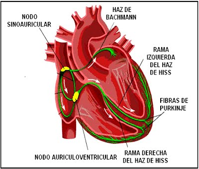 Cartoons for the cardiovascular system - The Cardio Research Web Project
